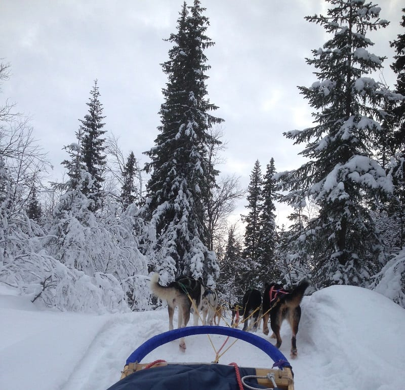 Courchevel activities husky sledding