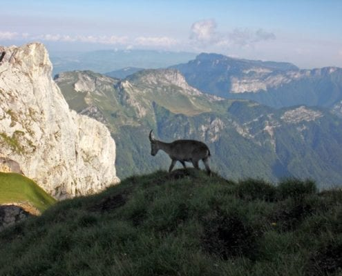 Hiking and wildlife lake annecy activities